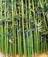 El bambú en la construcción