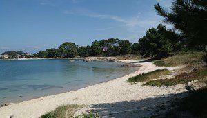 Chusky y la playa solitaria