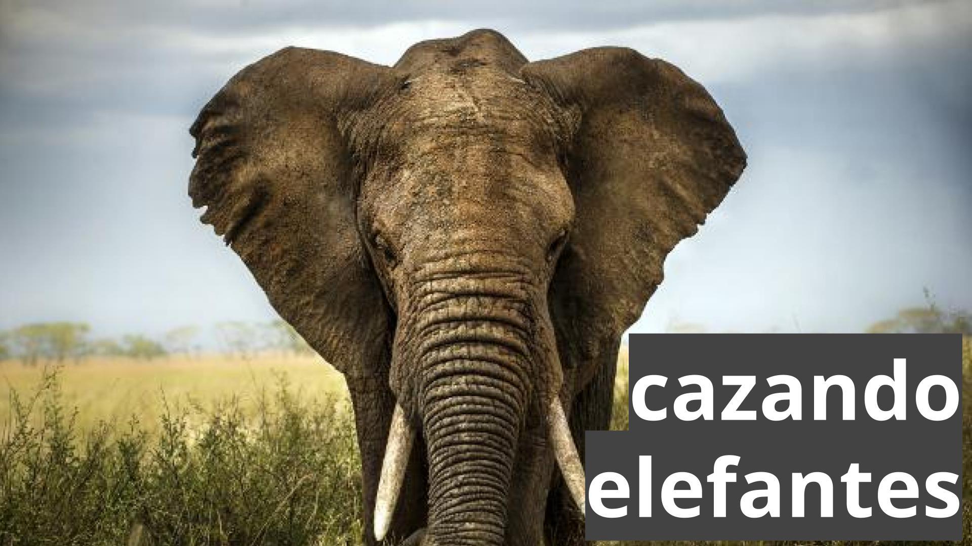 cazando elefantes